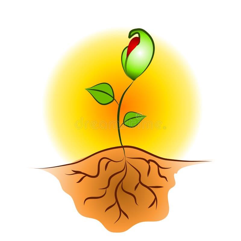 La pianta del semenzale sradica l'arte di clip royalty illustrazione gratis