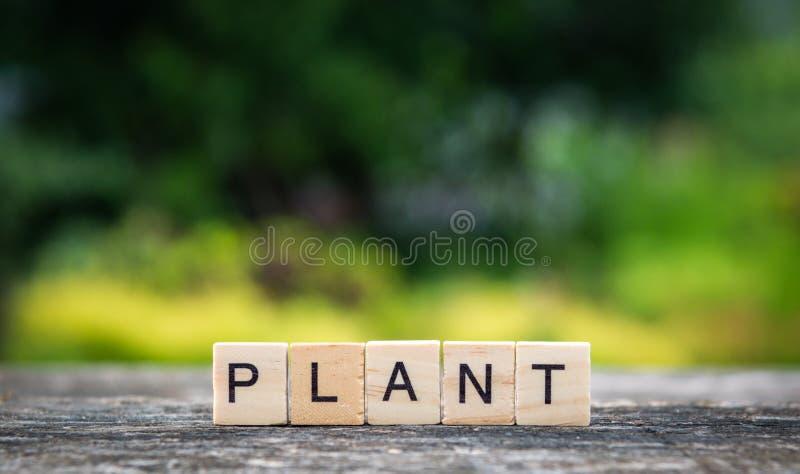 La pianta di parola, composta delle plance di legno leggere sui precedenti fotografie stock