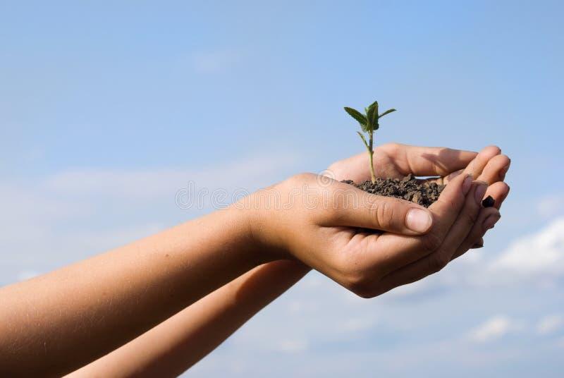 La pianta in mani fotografie stock