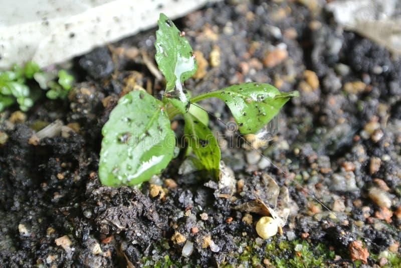 La pianta nel suolo immagine stock libera da diritti