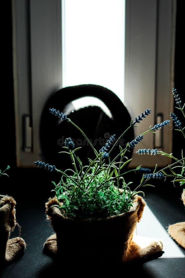 La pianta nella finestra fotografia stock