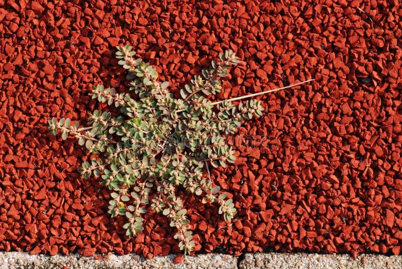 La pianta verde si sviluppa sulla pista