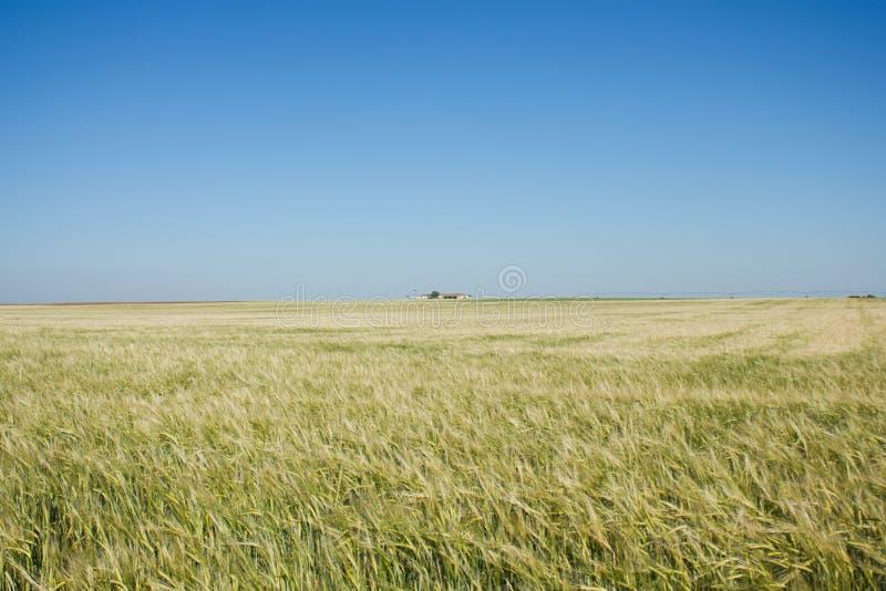 La pianura in Spagna fotografia stock libera da diritti