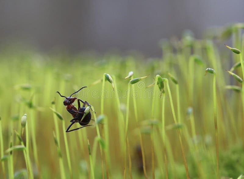 La piccola formica fotografia stock libera da diritti