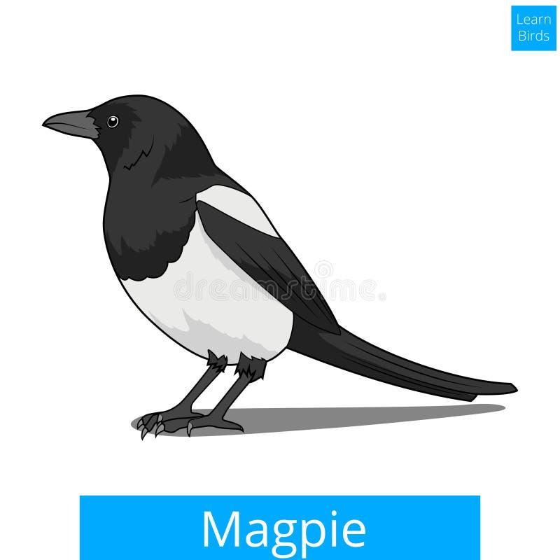 La pie apprennent le vecteur éducatif de jeu d'oiseaux illustration de vecteur