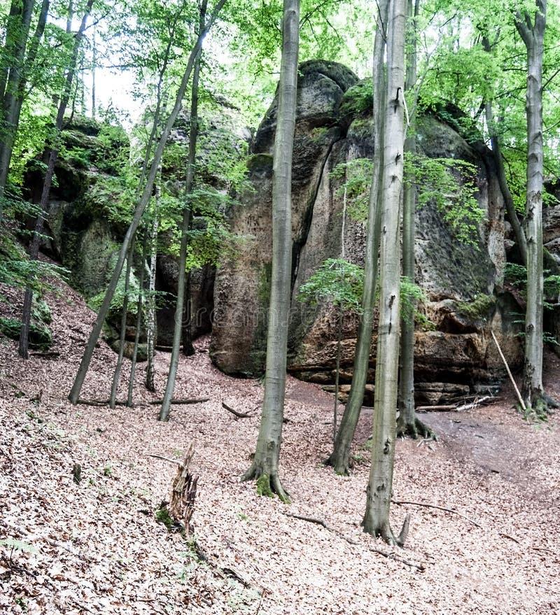 La piedra arenisca oscila en bosque de hojas caducas en CHKO Kokorinsko en República Checa foto de archivo libre de regalías