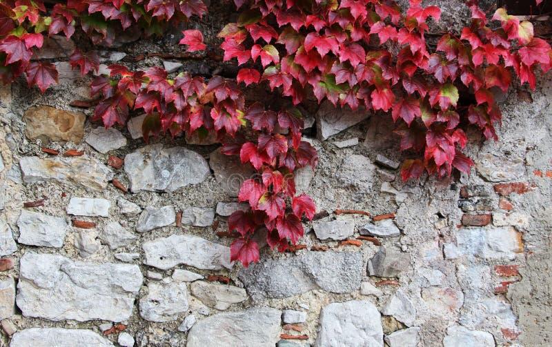 La piedra bloquea la pared vieja, con el unpon de las hojas él foto de archivo libre de regalías