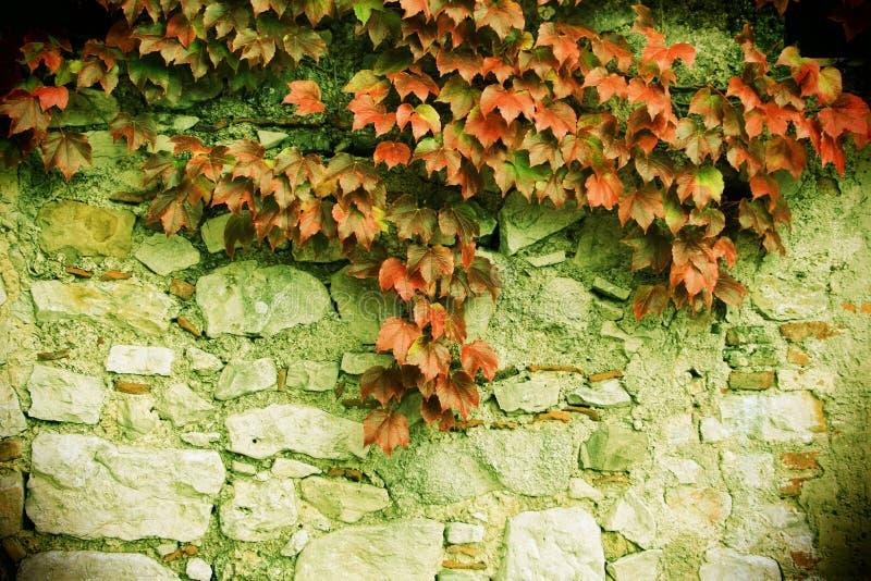 La piedra bloquea la pared vieja, con el unpon de las hojas él imágenes de archivo libres de regalías