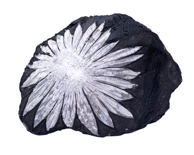 La piedra del crisantemo de la flor blanca de China fotos de archivo libres de regalías