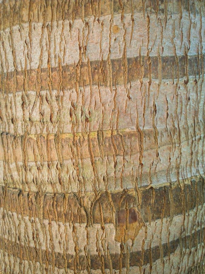 La piel del tronco del árbol de coco, textura de madera para el fondo foto de archivo