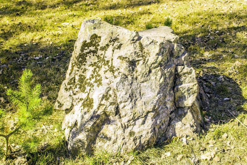 La pietra coperta di muschio su una radura nel giorno soleggiato in primavera fotografia stock libera da diritti