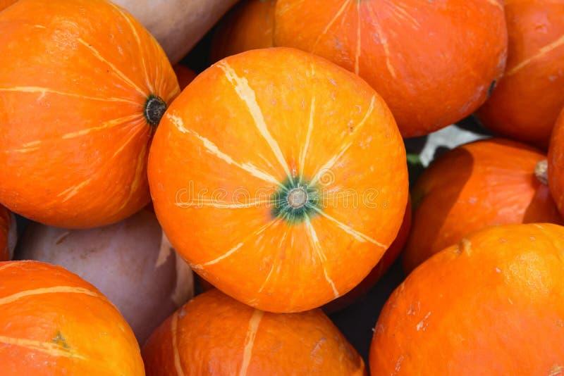 La pila de calabazas anaranjadas maduras brillantes de Hokkaido en los granjeros comercializa el remiendo Autumn Fall Harvest Tha fotos de archivo