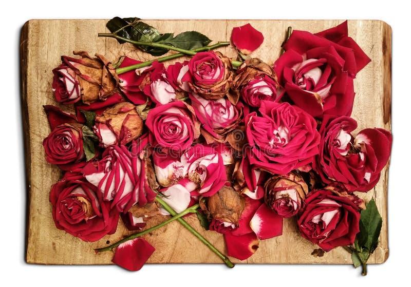 La pila de rosas rojas marchitadas se coloca en un tablero de madera - una mirada artística de la decadencia fotografía de archivo