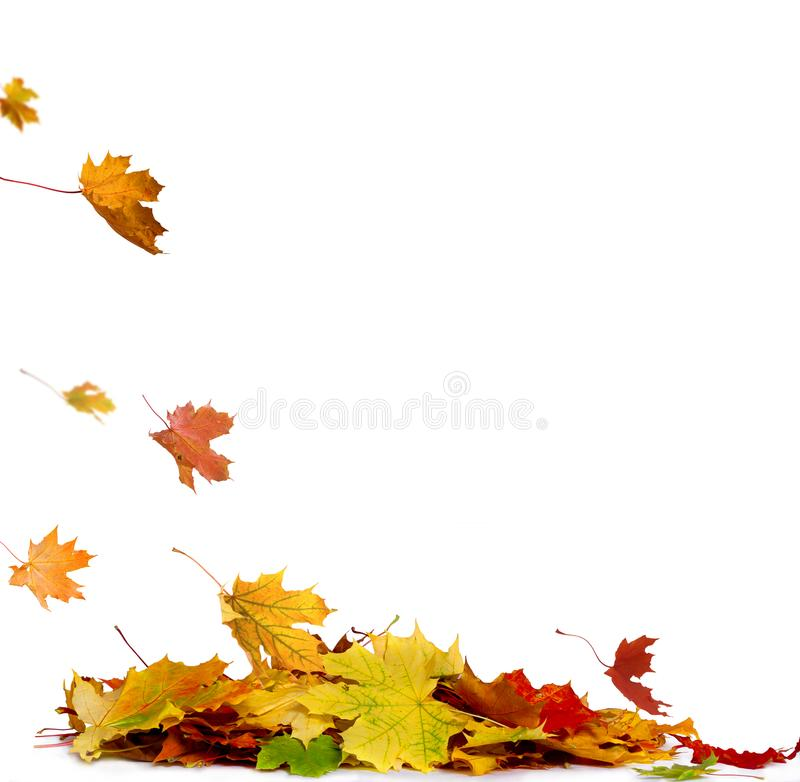 La pile de l'automne a coloré des feuilles d'isolement sur le fond blanc photo libre de droits