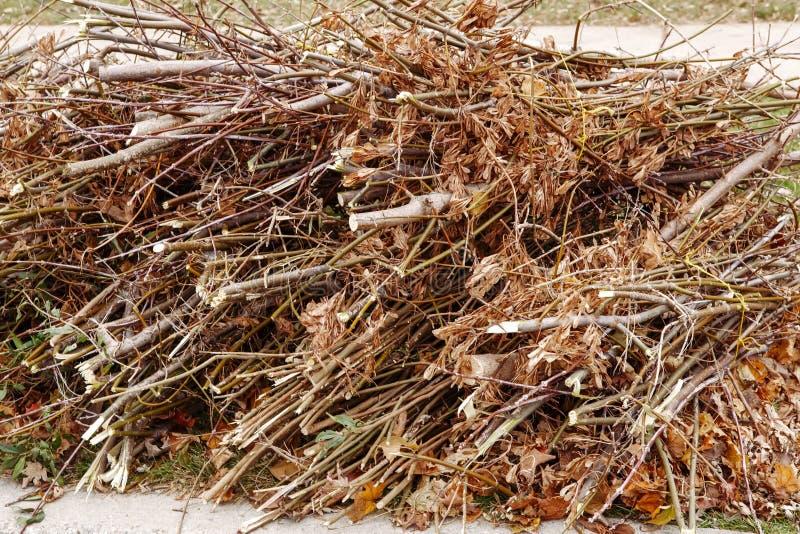 La pile de vieilles branches d'arbre sèches de coupe avec la chute d'automne part sur elles, déchets de rebut de déchets sur la t photos stock