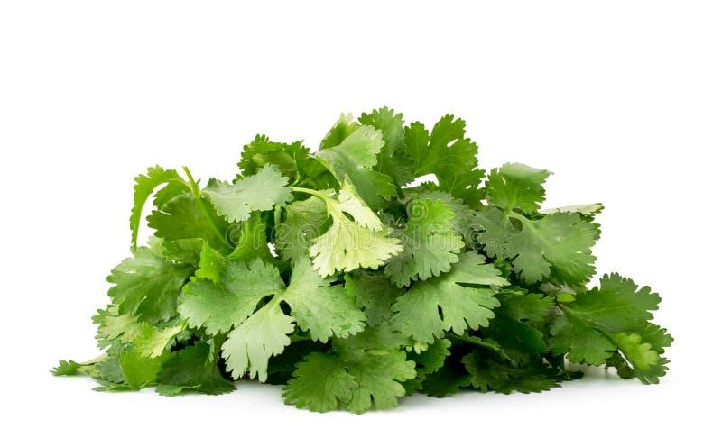 La pile des feuilles fraîches de cilantro se ferment sur un blanc D'isolement image libre de droits