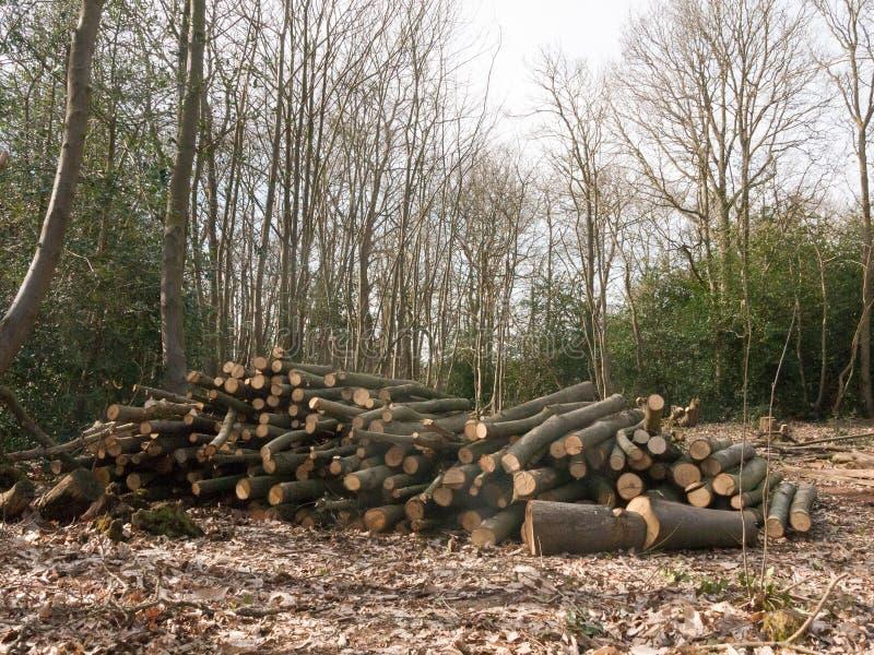 la pile des troncs d'arbre en bois de tronçon de branches a réduit le bois W de forêt photo libre de droits