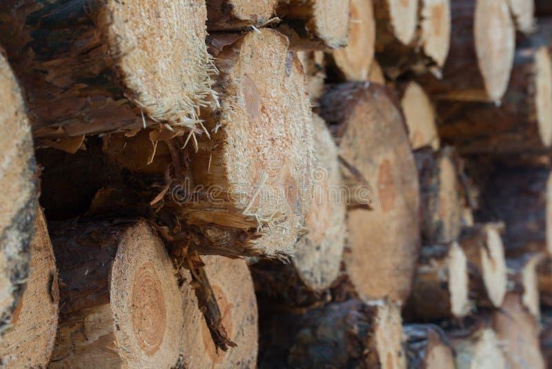 La pile du bois note le plan rapproché photo libre de droits