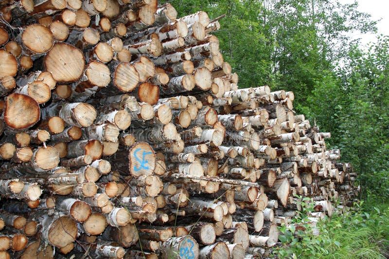 La pile du bouleau ouvre une session la forêt image libre de droits