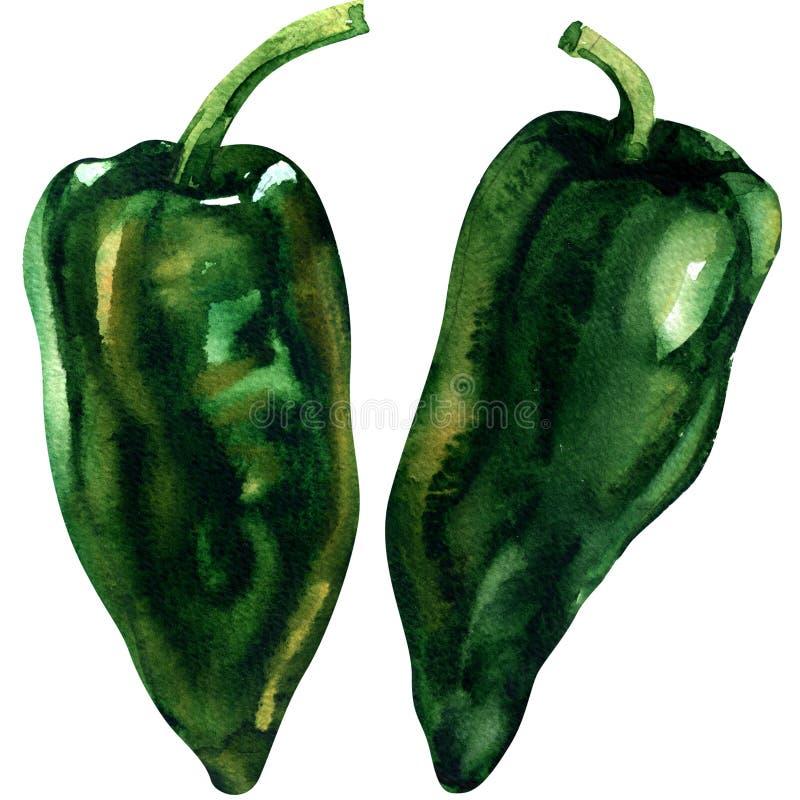 La pimienta verde, verdura entera, dos aisló los objetos, ejemplo de la acuarela en blanco stock de ilustración