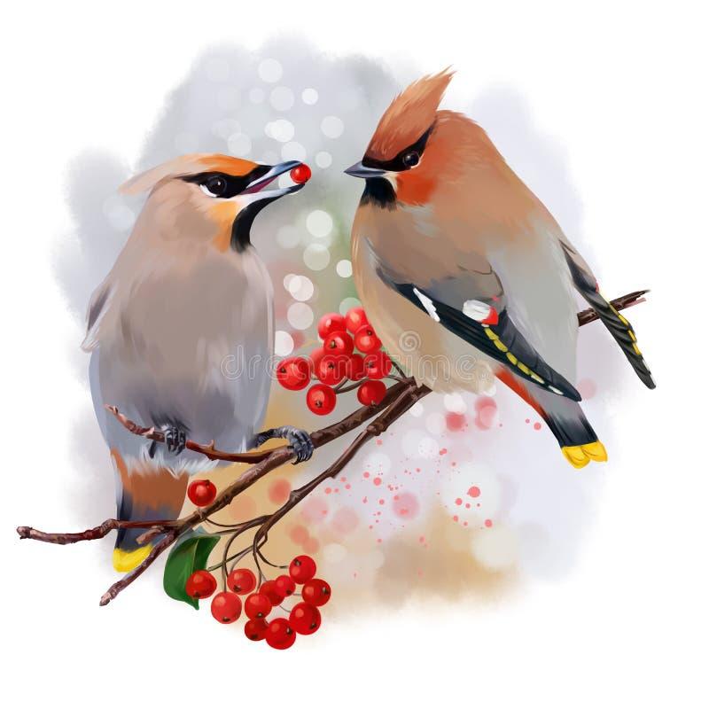 La pintura de la acuarela del Waxwing stock de ilustración
