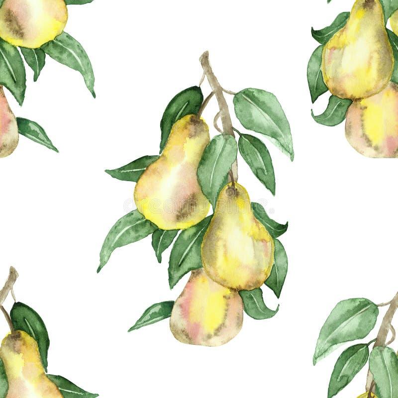 La pintura de la acuarela es un modelo botánico del peral con las frutas jugosas y las hojas verdes en las ramas aisladas en un f libre illustration