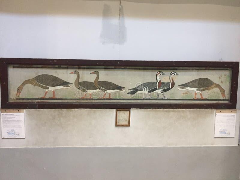 La pintura media egipcia de los gansos imágenes de archivo libres de regalías