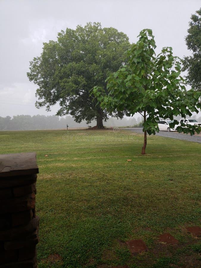 La pioggia è una buona cosa fotografia stock