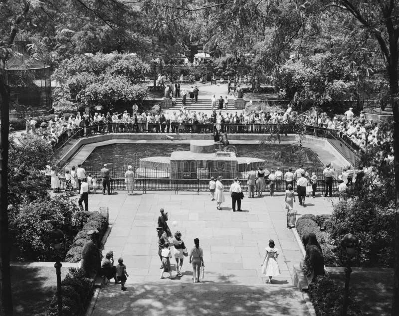 La piscine de joint au zoo de Central Park, New York, NY (toutes les personnes représentées ne sont pas plus long vivantes et auc images libres de droits