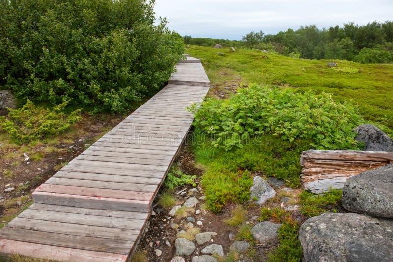 La pista de senderismo se equipa del suelo de madera en la isla de Bolshoy Zayatsky foto de archivo