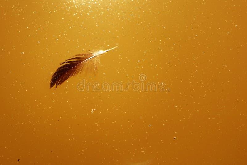 La piuma di un uccello che galleggia sull'acqua tranquilla del lago come fondo fotografia stock