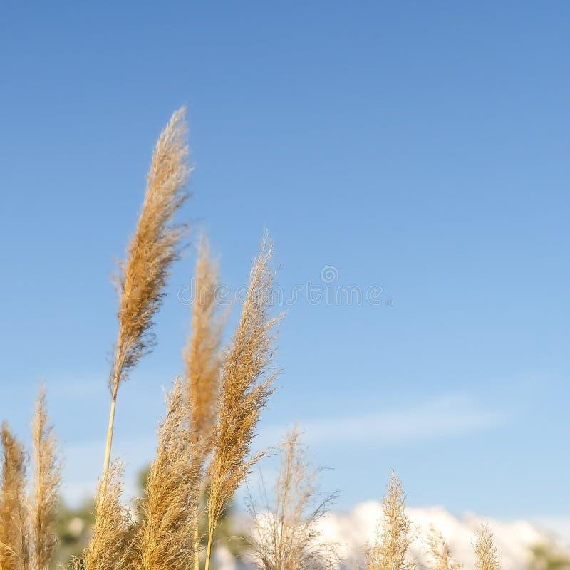 La place se ferment des herbes avec la vue de la montagne et du ciel bleu à l'arrière-plan brouillé images stock