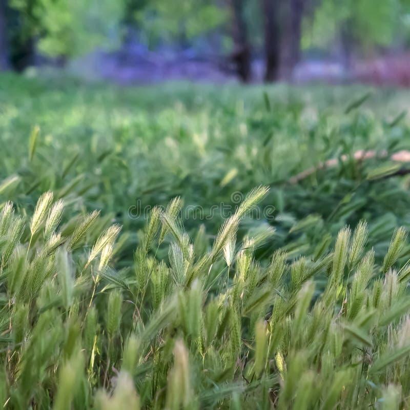 La place se ferment des herbes vertes abondantes dans la forêt avec des arbres à l'arrière-plan image libre de droits