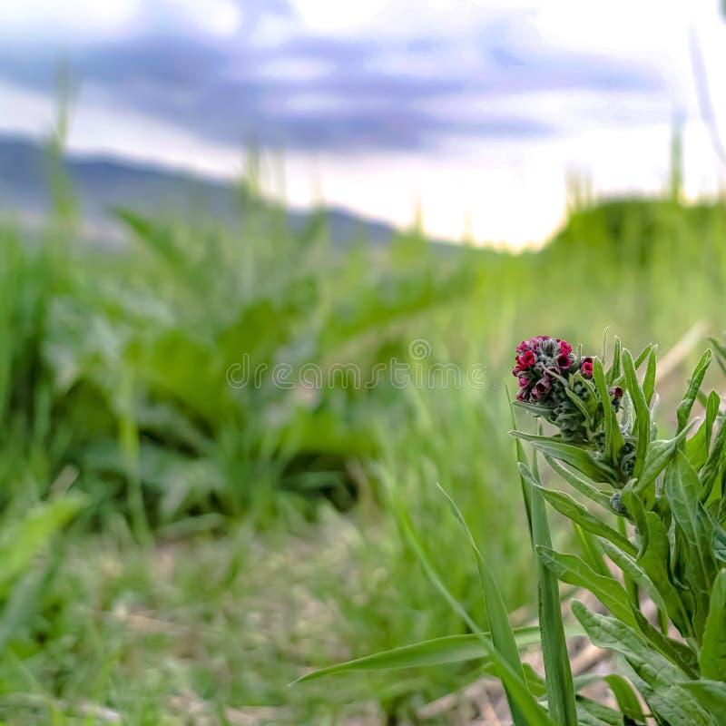 La place se ferment des usines avec de longues feuilles vertes et des groupes de petites fleurs rouges photographie stock