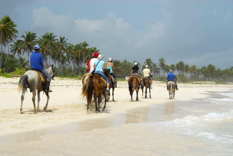 la plage conduisent à cheval photo libre de droits