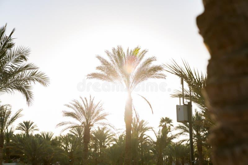 La plage de coucher du soleil avec des palmiers et le beau ciel am?nagent en parc Vintage d'effet images stock