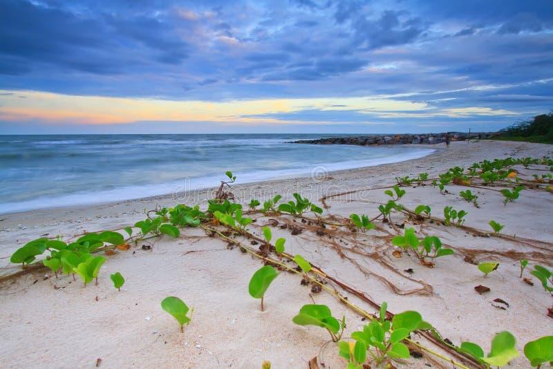 La plage de gloire de matin cha-suis dedans photographie stock