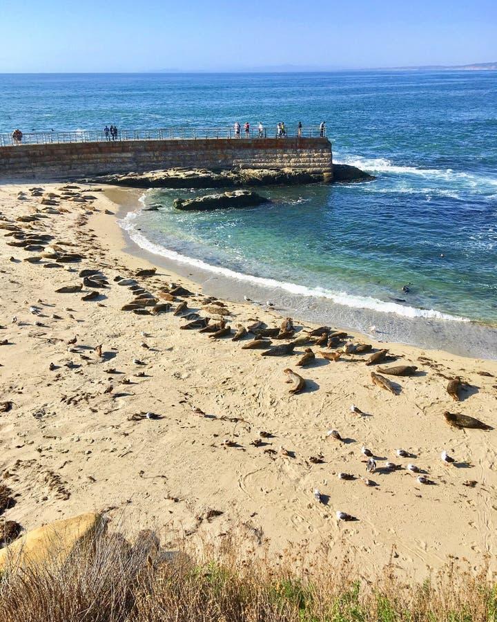 La plage des enfants de crique de La Jolla image stock