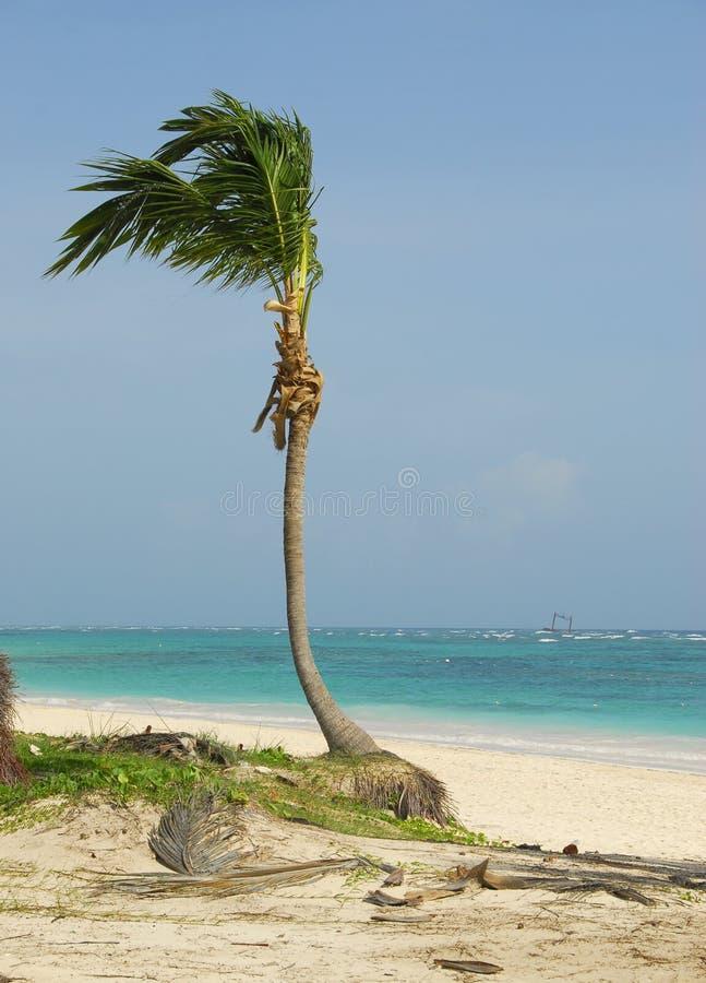 la plage rêve le mon images stock