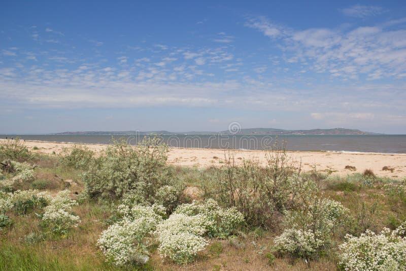 La plage sablonneuse est envahie avec le chardon photos stock