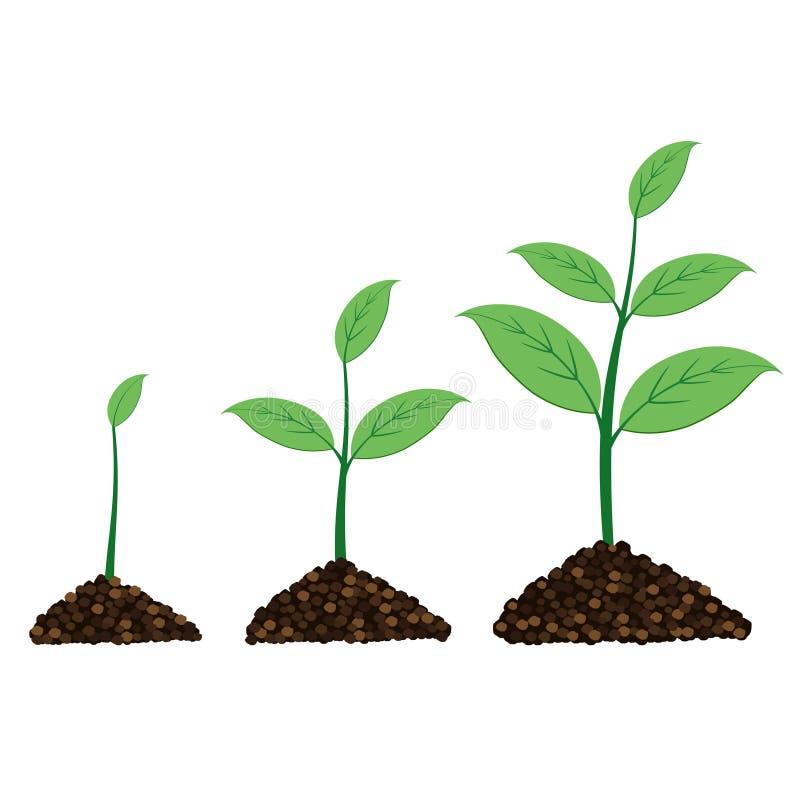 La planta crece en un momento libre illustration