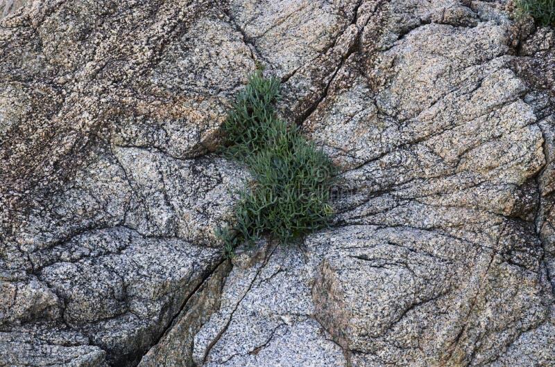 La planta crece en una grieta imagen de archivo