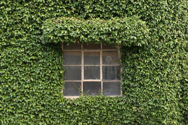 La planta cubrió el edificio imagen de archivo