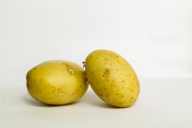 La planta de la familia del nightshade que produce los tub?rculos de la patata en los corredores subterr?neos imagen de archivo libre de regalías