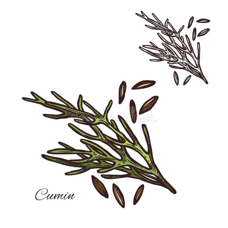 La planta del condimento del comino siembra el icono del bosquejo del vector ilustración del vector