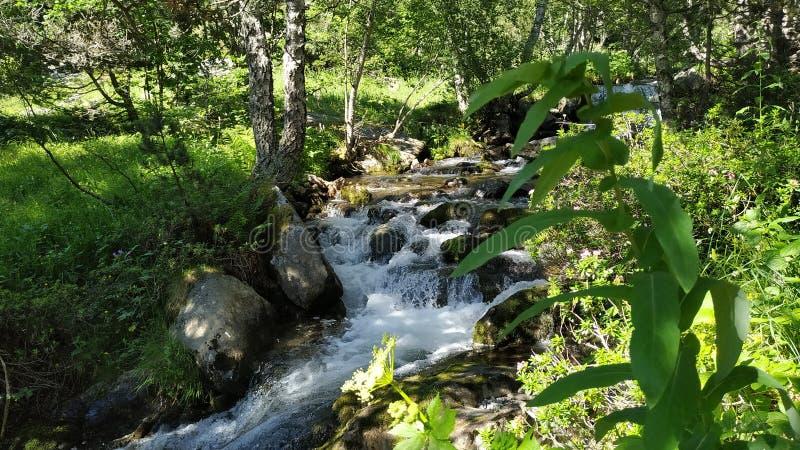 La planta por el río imágenes de archivo libres de regalías