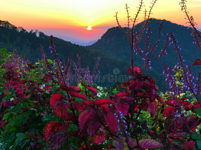 La planta roja la puesta del sol imagenes de archivo