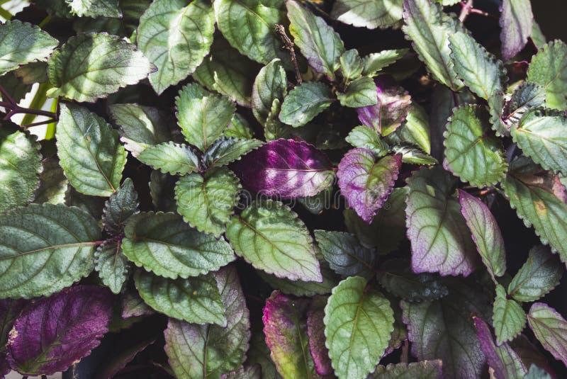 La planta sale textura del follaje del jardín al aire libre de la botánica imagen de archivo libre de regalías