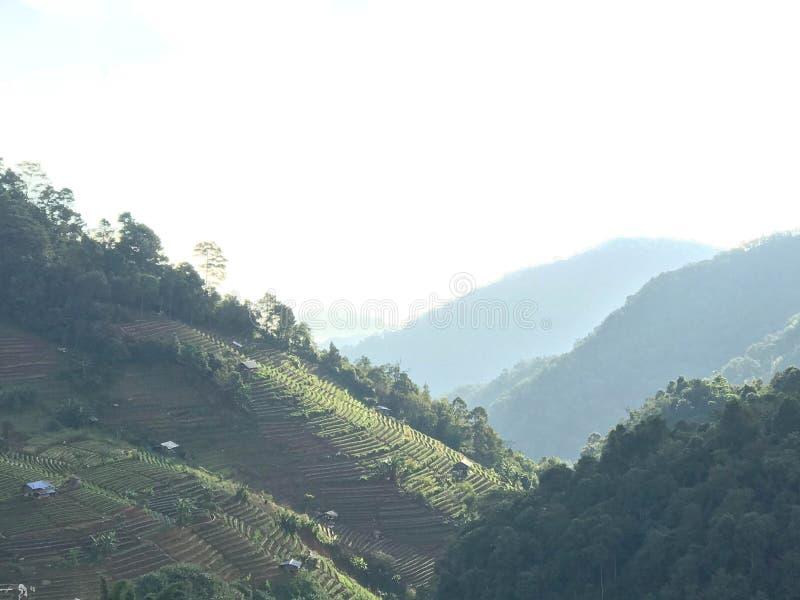 La plantation de fraise et la maison locale sur la colline inclinent avec le brouillard dedans photo stock