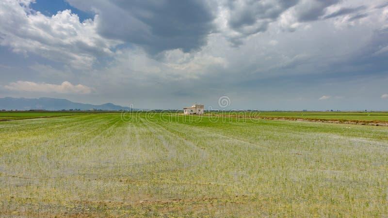 La plantation de riz a inondé, maison et ciel nuageux photos libres de droits